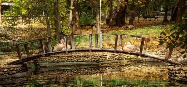 Things to do in Varna - The Zoo