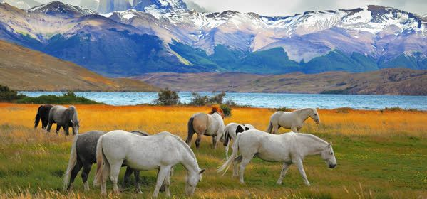 Things to do in Torres del Paine  - Torres del Paine National Park