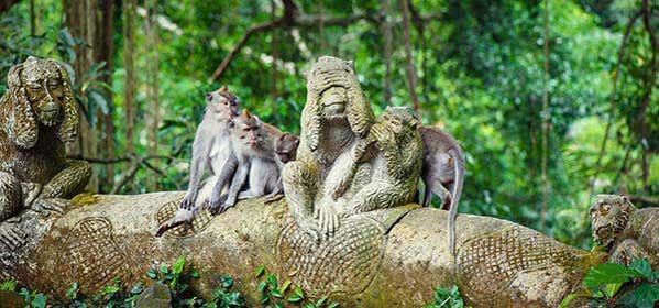 Things to do in Bali - Ubud Monkey Forest
