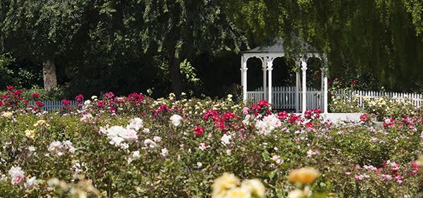 Things to do in Palmerston North - Victoria Esplanade Gardens