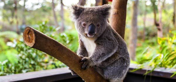 Things to do in Sydney - Wild Life Sydney