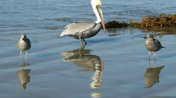 title: Beautiful Birds at the Beach in California USA