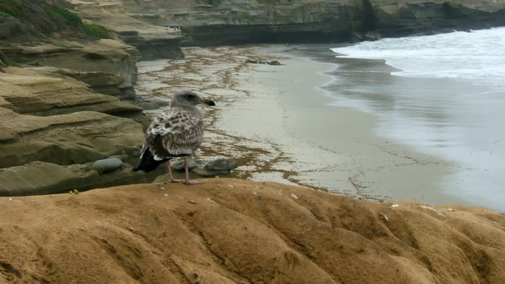 title: Bird on the Beach Shores of La Jolla San Diego