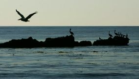 Birds Flying and Resting on the Rocks at Malibu Beach