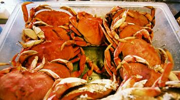 Discover San Francisco Sea food of Fisherman s Wharf