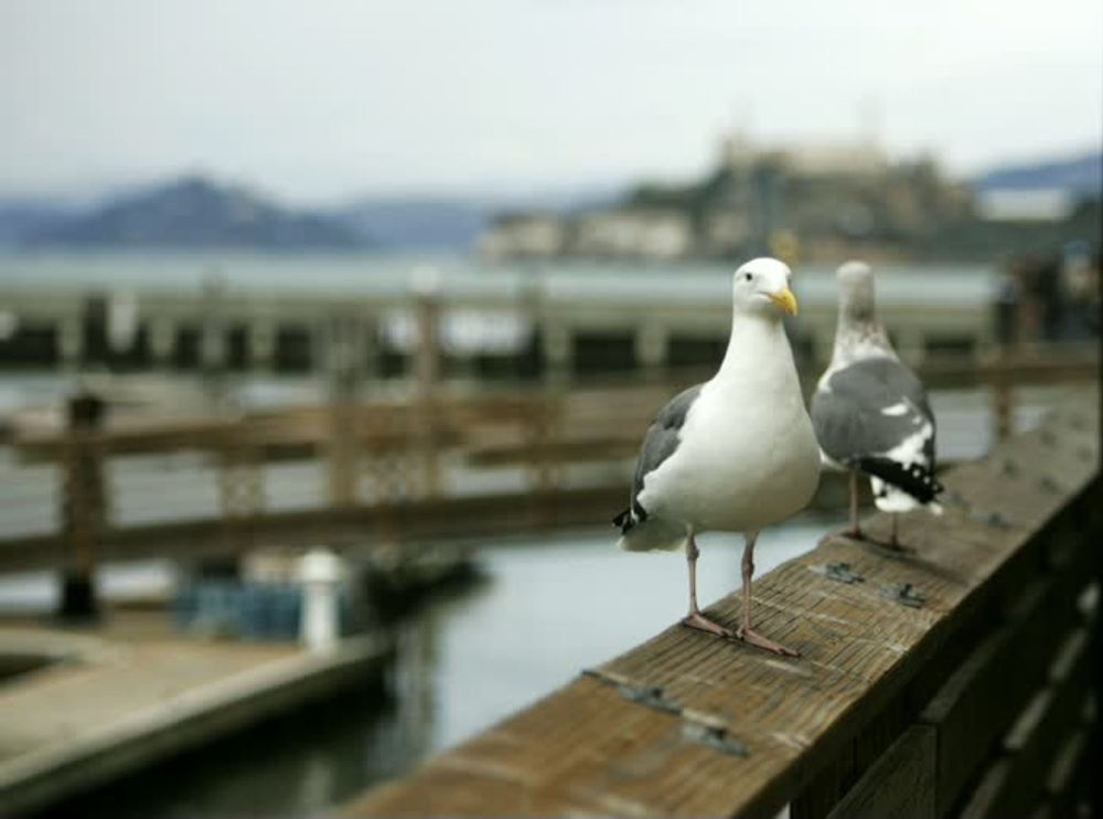 title: Seagulls at the California beach