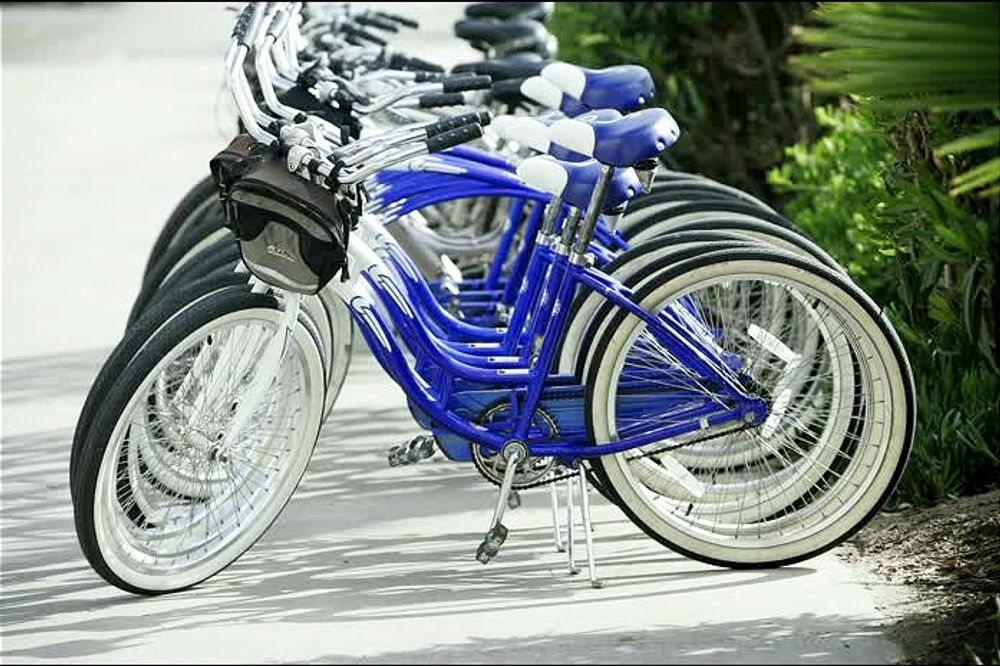 title: Deep Purple Royal Blue Bikes for Rent in San Diego