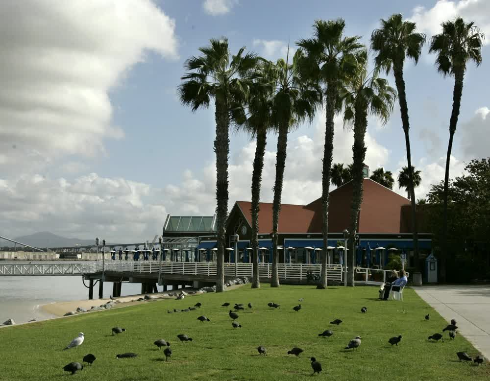 title: Feeding the Birds by the Ocean in San Diego Quay