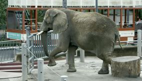 Elephants in San Diego Zoo