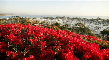title: Red Flowers Above a Spectacular View of the Port of Orange County
