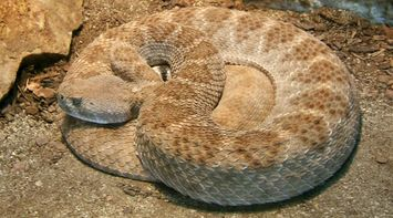 title: Scary Brown Snake Wrapped at San Diego Zoo