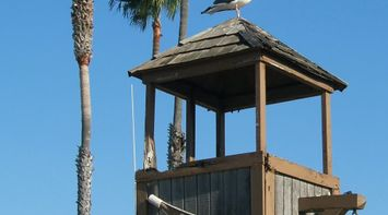 title: Seagull Perched on Top of Crows Nest Wooden Structure Tower