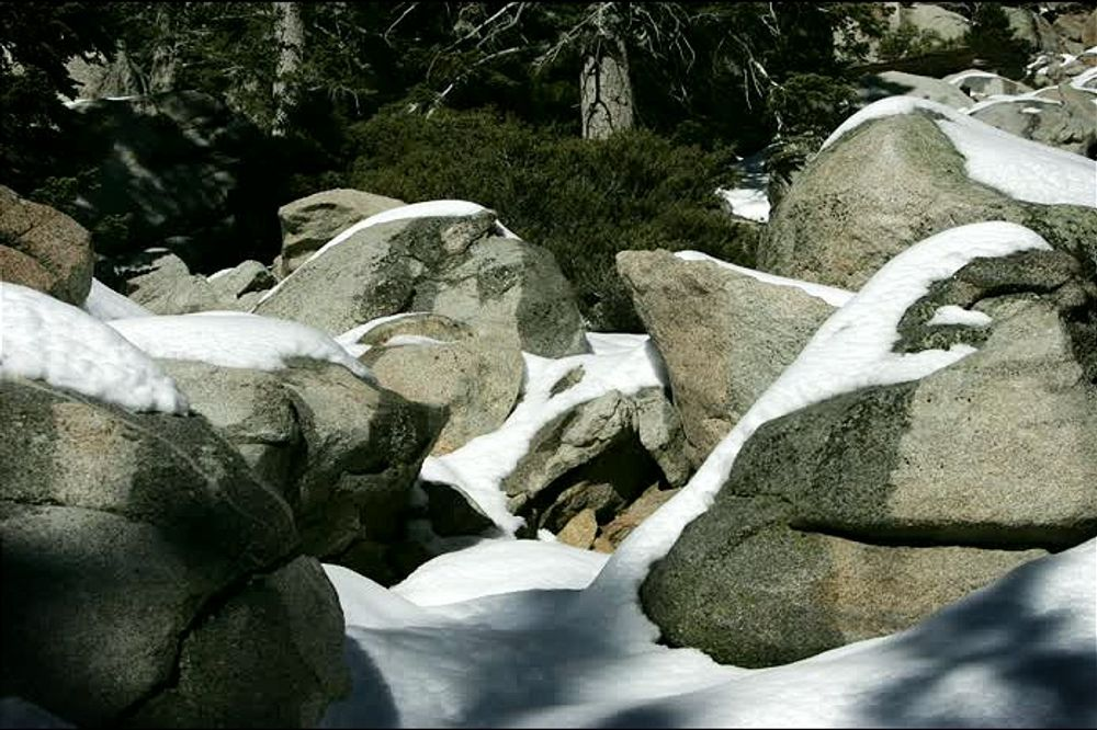 Snowy nature in palm spring