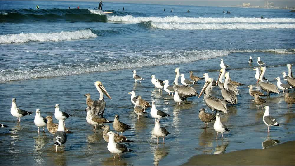 Birds at Beach