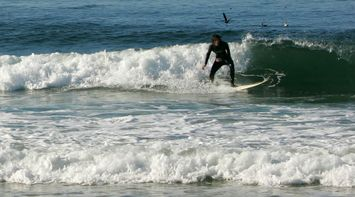 title: Surfers on the Waves with Birds