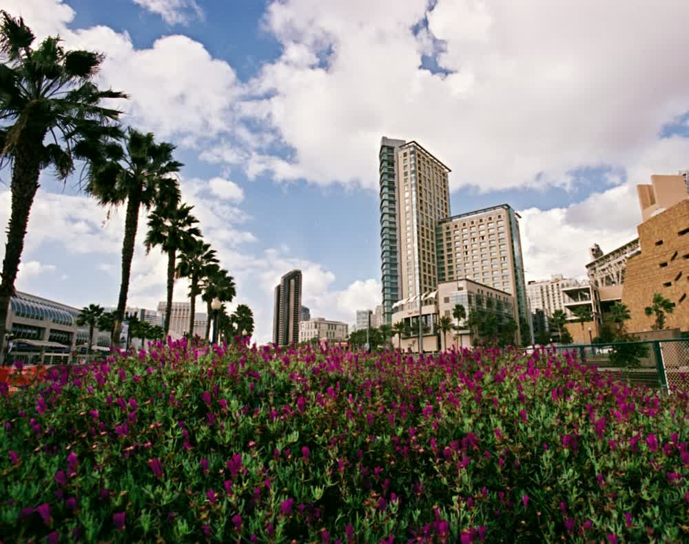 title: The Lovely Flowers by Tall Buildings in San Diego