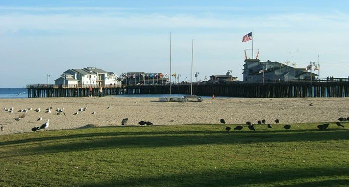 title: Birds on the Grass by the Sandy Santa Barbara Beach