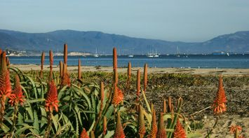title: Lovely Exquisite Orange Cone Flowers Bordering the Boats on the Ocean at Santa Barbara Beach
