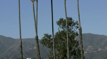 title: Setting Up Small Kiosks Under Tall Trees at the Santa Barbara Beach in California