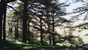 Al Arz of Lebanon in the Day Time in Spring