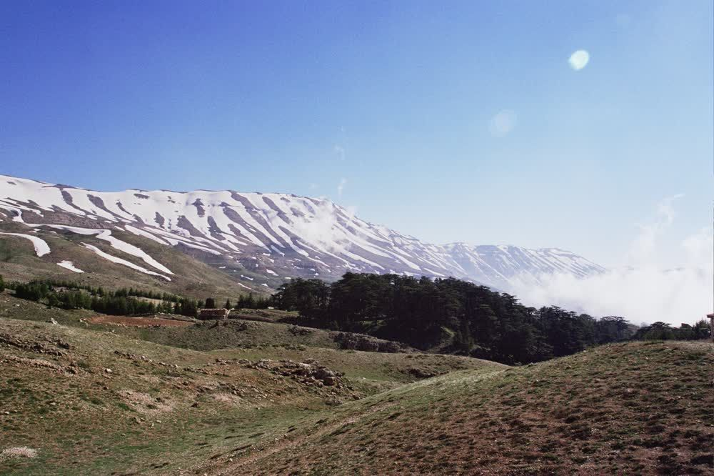 title: Beautiful Forest Mountain Scenery in the Cedars Region