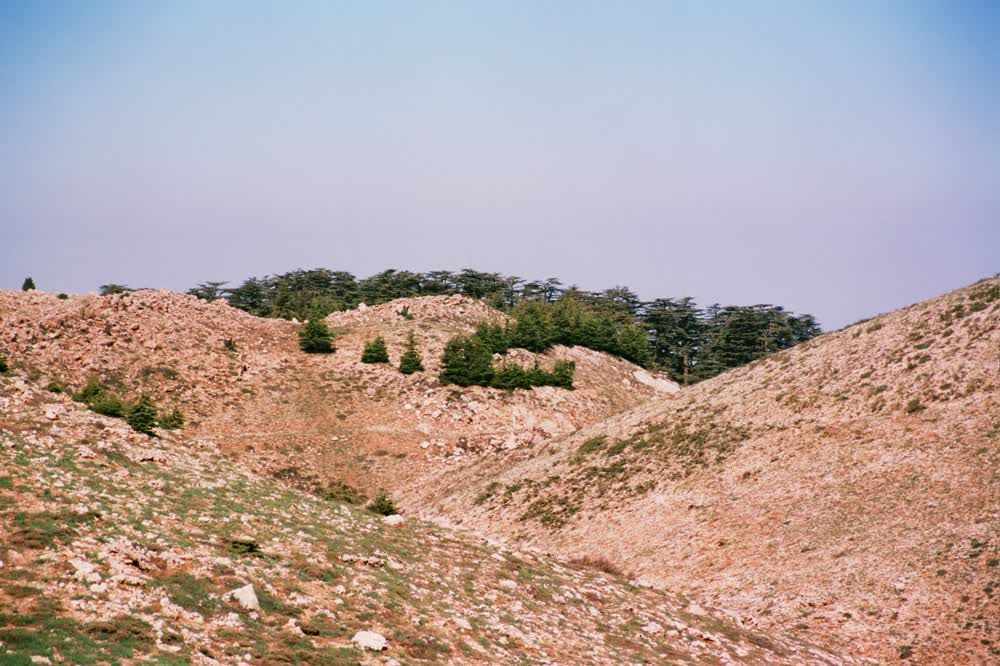 title: Cool Hills of the Mountain in the Cedars Region