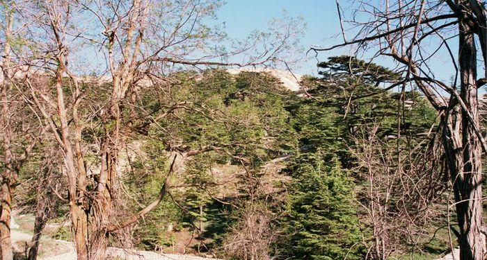 title: Cool Trees in the Spring Time on the Mountain