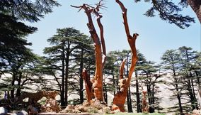 title: Dead Tree Trunks Molded into Art by Rudy Rahmeh in Bcharreh