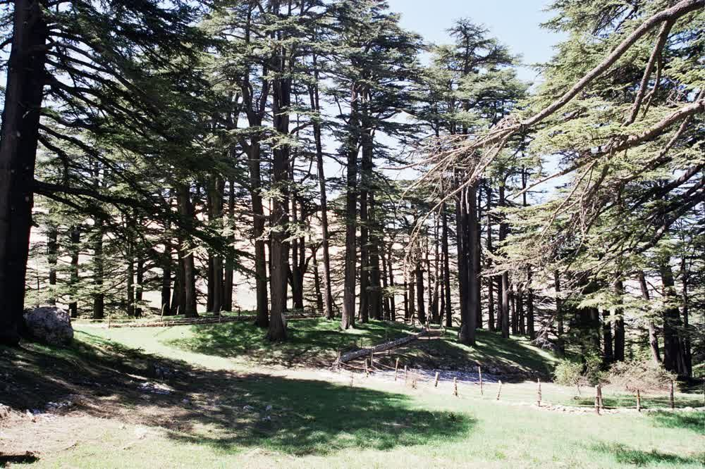 title: Forest of The Cedars of Lebanon Les Cedres du Liban