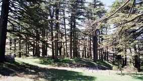 Forest of The Cedars of Lebanon Les Cedres du Liban
