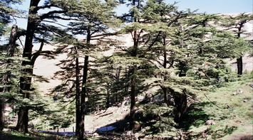 title: Interesting Scenes of the Forest in Bcharreh