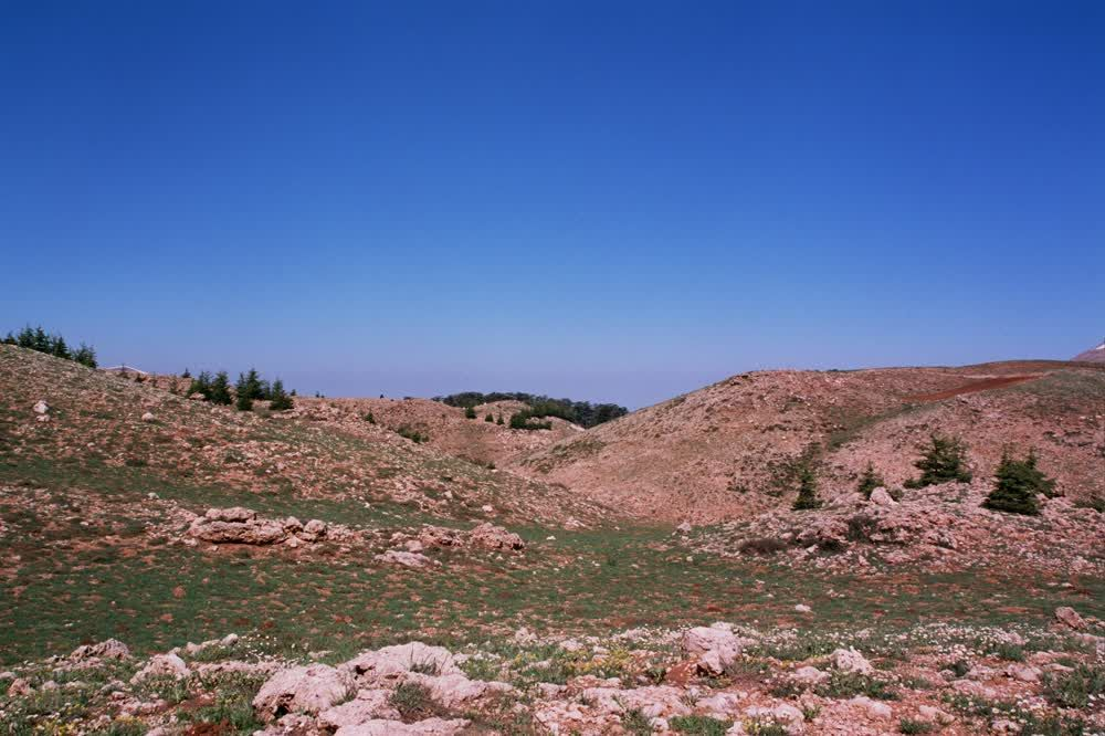 title: Natural Mountain Area of the Cedars of Lebanon