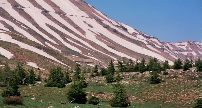 title: Snow Patterns on the Mountain of the Cedar Region