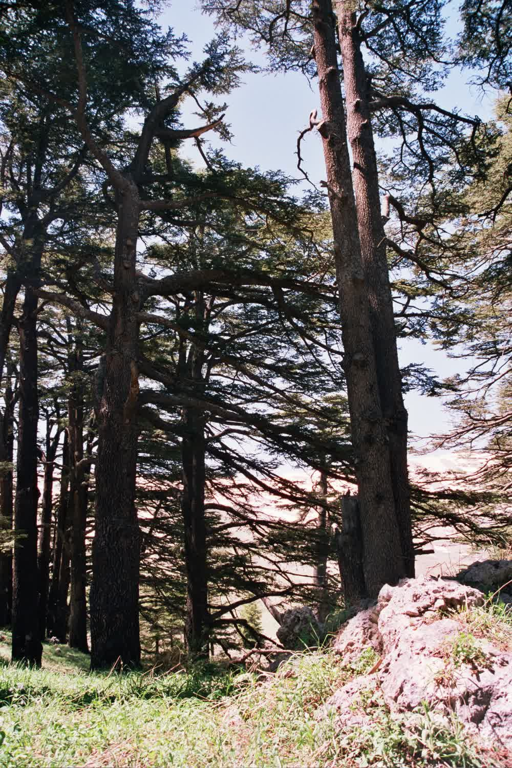 title: Tall Forest Trees while Hiking