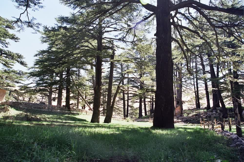 title: Tall Trees and Green Grass Nature in Forest