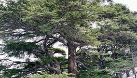 The Cedars Mountain of Lebanon in Bcharreh Region