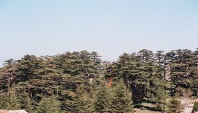 The Many Cedar Trees of Lebanon in the Distance