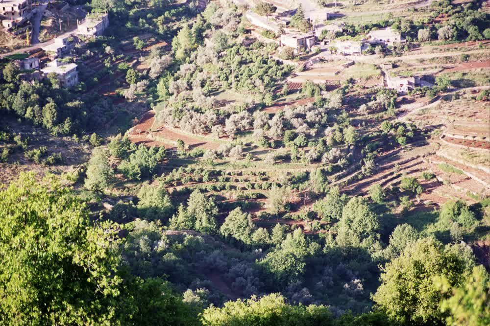 title: Trees Below in the Bcharreh Mountains