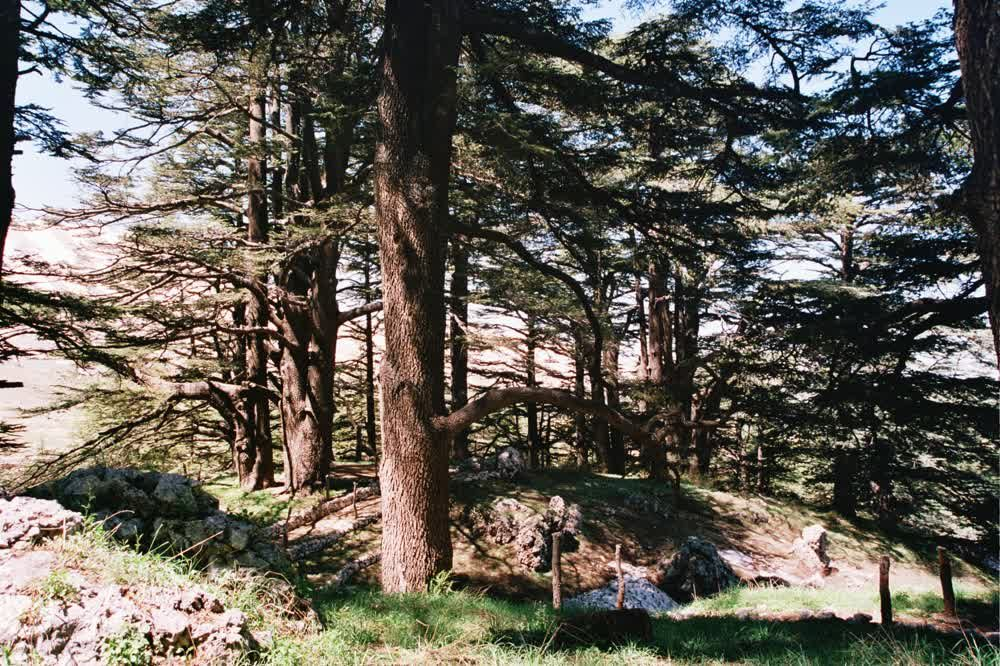 title: Trees of the Forest Excursion in lebanon