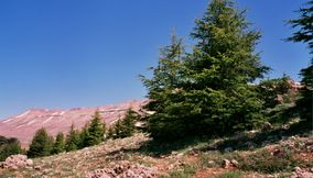 Trees on the Mountain by the Cedar Trees