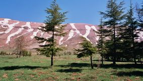 Very Slim Trees Surviving Cold Winters on the Mountain Top