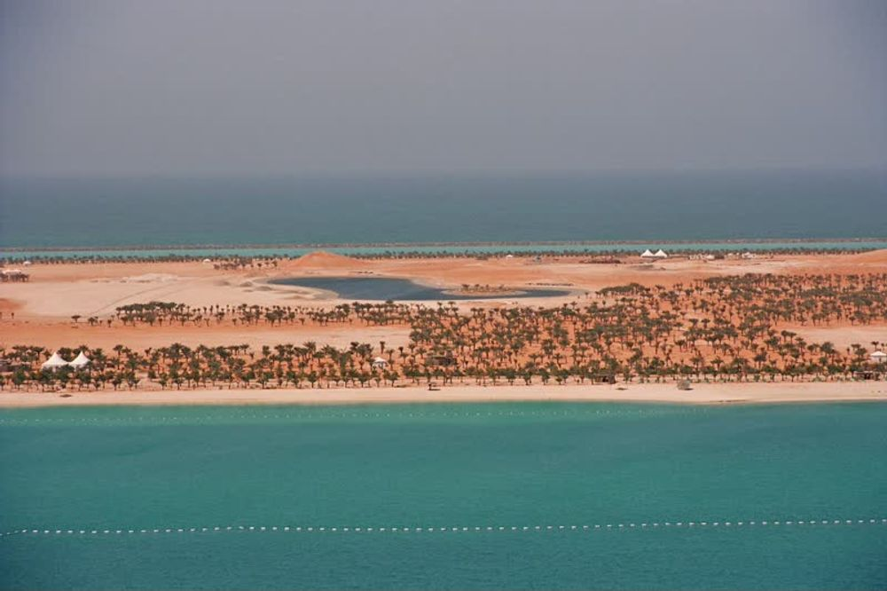 title: Aerial View of the Sandy Beach Shores Filled with Palm Trees