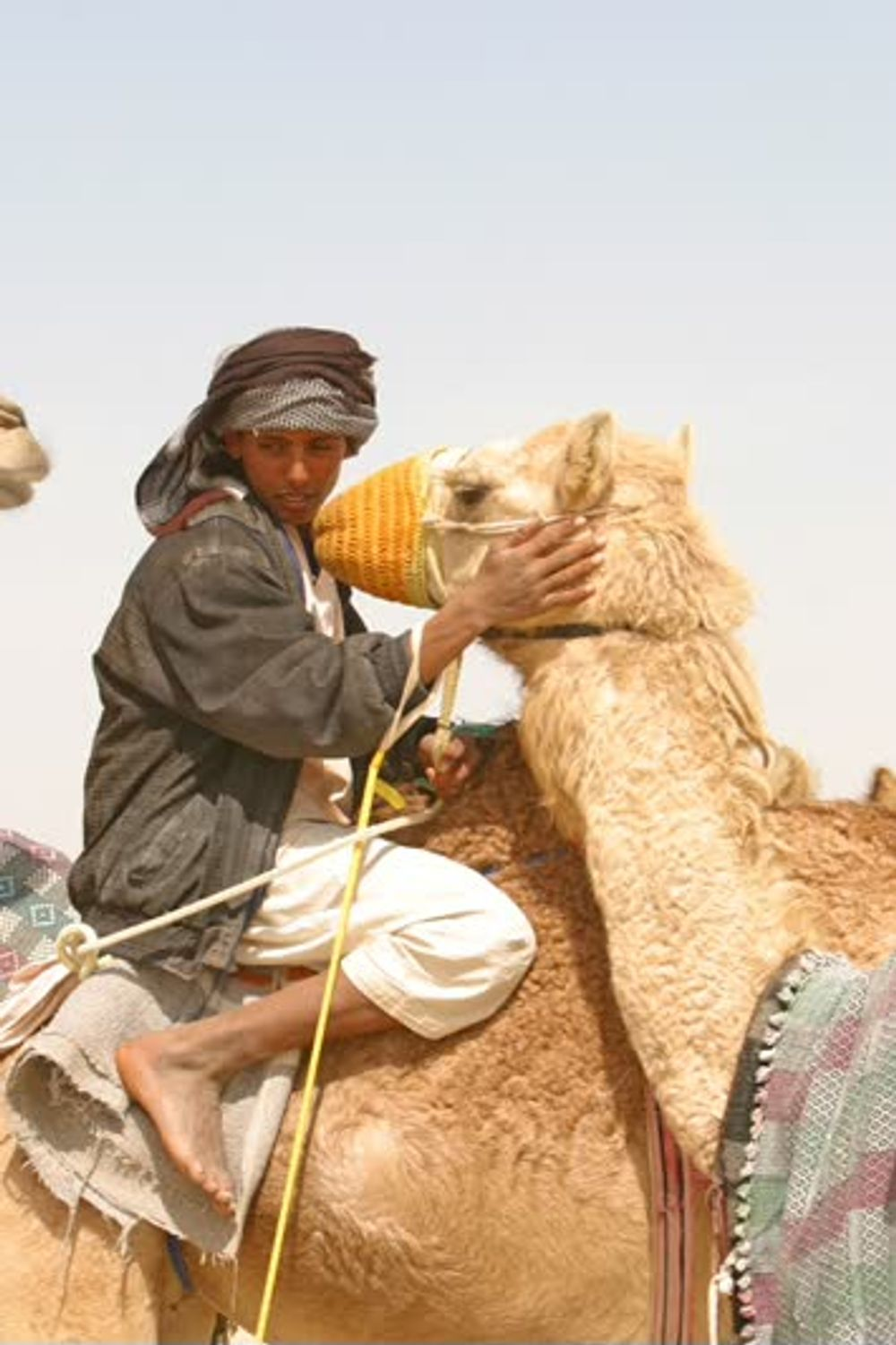title: Camel in the desert 2