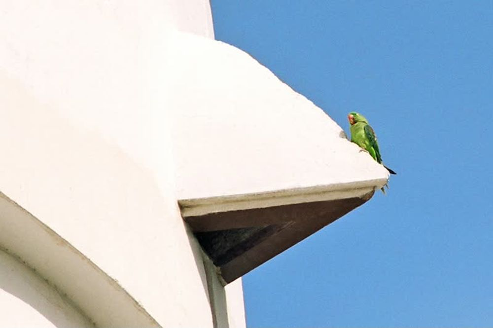 title: Cute Green Parrot