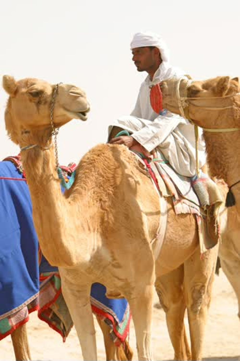 title: Camel in the Desert