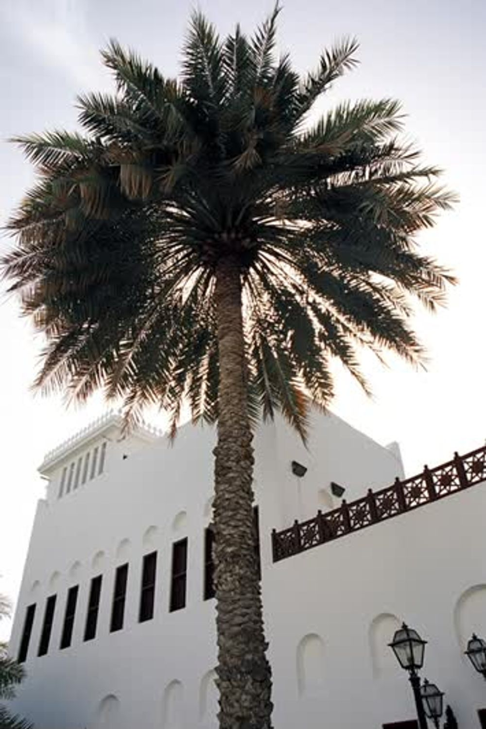 Tall Palm Tree by a White Building