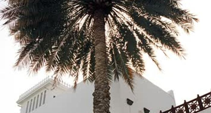 title: Tall Palm Tree by a White Building
