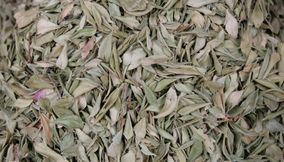 title: Dried Leaves for Sale in the Souk of Marrakesh