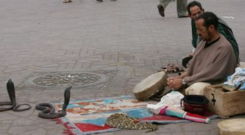 Local Snake Charmer Charming Three Snakes on the Street