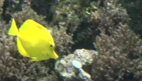 San Francisco wonderful yellow fish and a very nice color combination of blue black and yellow